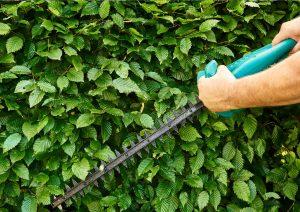 Société paysagiste spécialisée dans l'entretien des jardins à Lahage (31370)
